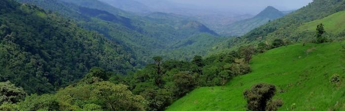 Landscape Buenaventura Reserve, Ecuador