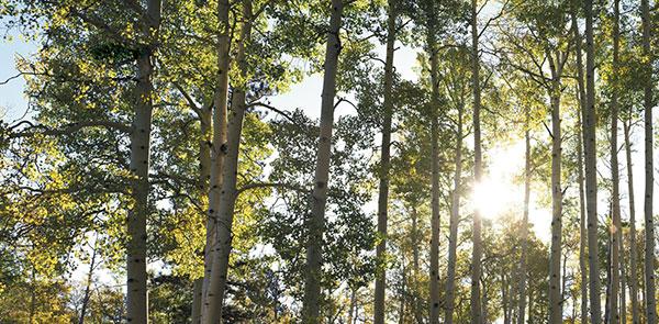 sundaytimesaward-trees-amnd