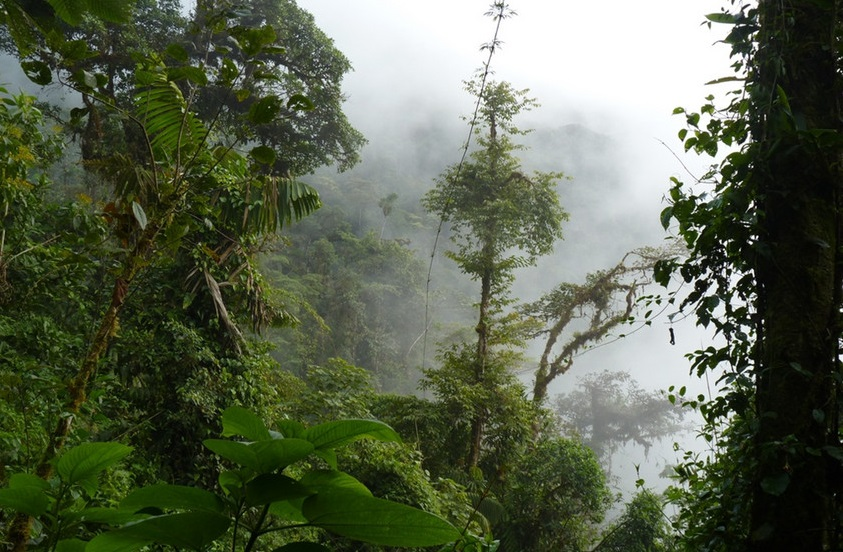 Colombia, Chocó forest habitat